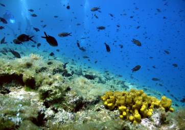 IAC Open Water Diver – diving course for beginners