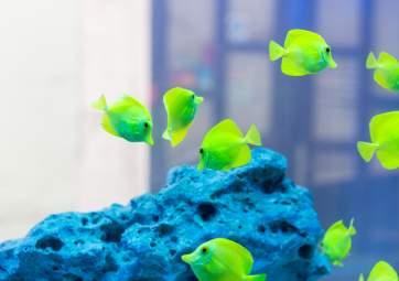 Tropical Aquarium Krk