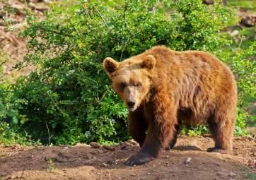 Das Bärenrefugium in Kuterevo